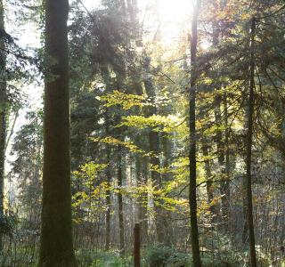 Korporation Sursee Home Wald